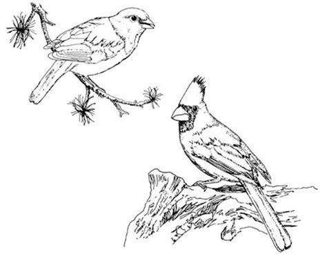 winter cardinal coloring page winter cardinal coloring page coloring pages