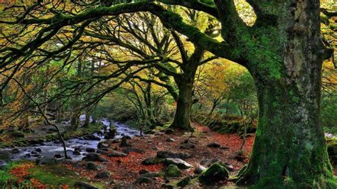 Tree Netting Ireland by Nature Trees Forest Water Ireland National Park