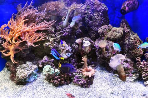 aquascaping live rock aquascaping live rocks in your saltwater aquarium
