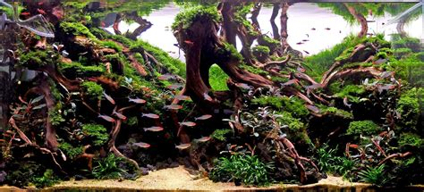 green machine aquascape 100 green machine aquascape get excited and make something aquascaping world