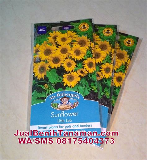 Jual Bibit Bunga Krokot jual bibit bunga matahari mini benih biji sunflower leo mr fothergills asli