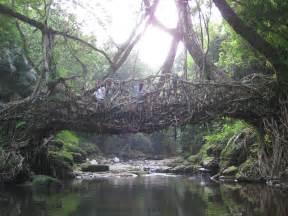 Living Bridges by Papercities 187 Living Bridges