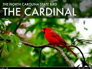 state bird of north carolina copy of north carolina symbols by alex stokes