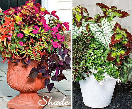Design For Potted Plants For Shade Ideas Urning Its Keep Design Finch