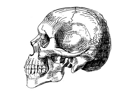 curiosidades del cuerpo humano megapost taringa curiosidades del cuerpo humano megapost taringa
