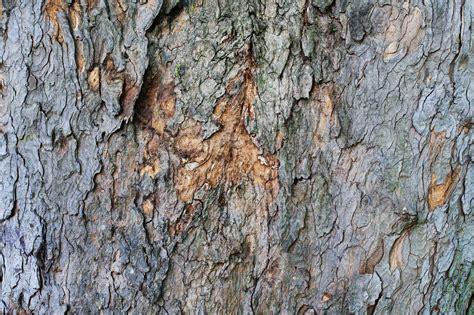 tree bark tree bark background