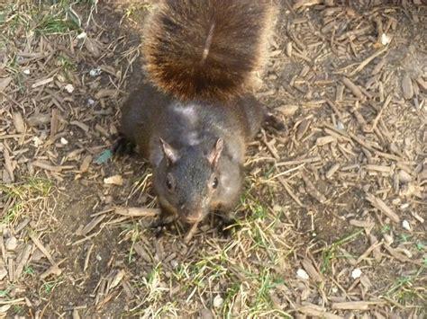 hair loss in squirrels hair loss in squirrels newhairstylesformen2014 com