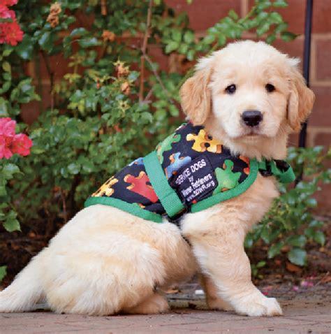 service puppy raiser service raisers needed in dc va md and nc pressrelease