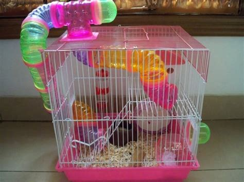 Hamster Berikut Kandang 7 kriteria kandang yang membuat hamster kamu tetap lincah satu jam