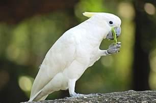 pet bird | Pets | Pinterest Pet
