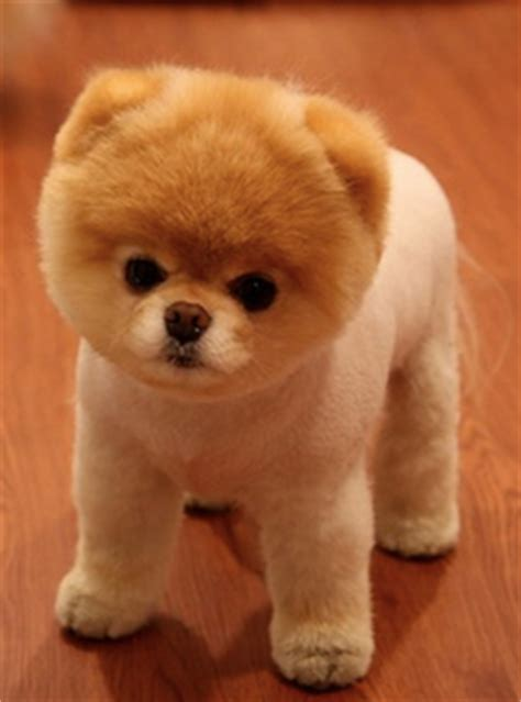 what type of is jiffpom what type of on the hunt