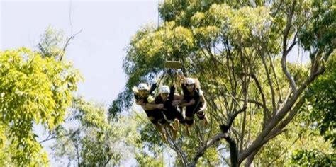 minjin jungle swing minjin jungle swing aj hackett cairns everything australia