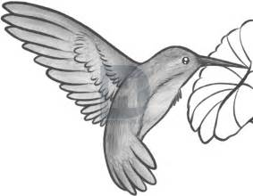 how to draw a hummingbird and flower step by step by