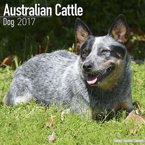 Dogs Sell Calendars Australian Cattle Calendar 2017 Breed Calendars
