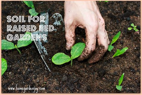 What Soil To Put In Raised Vegetable Garden Soil For Raised Bed Vegetable Gardens Home Garden