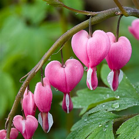 Anting Kelopak Bunga by Annisa Nr World Bunga Tercantik Di Duniaaa Wow O