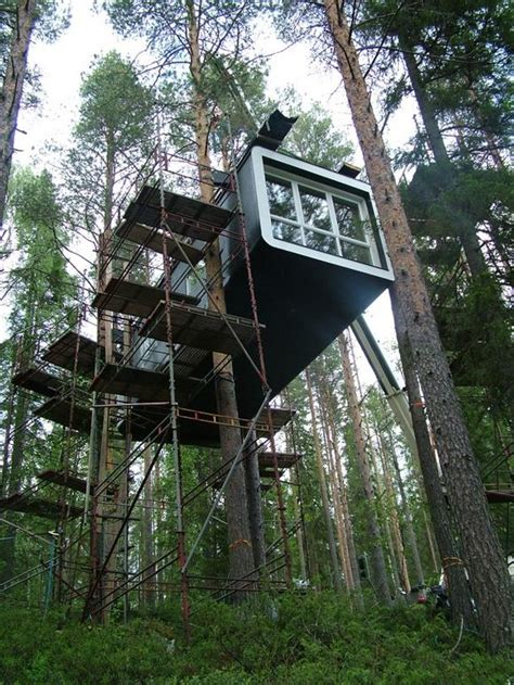 crazy tree houses magic tree house in the middle of a fir forest and few ideas for cool tree houses