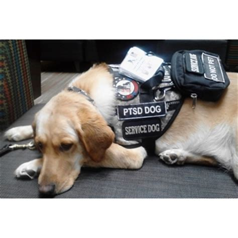 ptsd dogs harness for disabled rear mobility harness elsavadorla