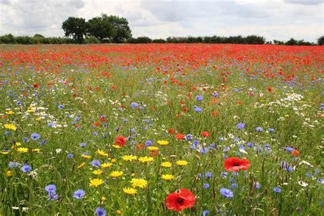 meadows of memories news blackwater garden centre