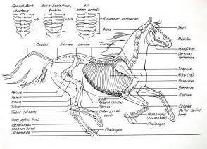 anatomy coloring book vet anatomy i mikki senkarik