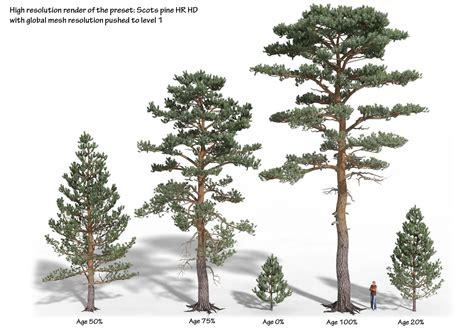 Pohon Natal Berkualitas Tipe Snow White Pine Tree Ukuran 9ft 2 7 Mtr scots pine bundle pinus sylvestris 1 plants to my future garden plants