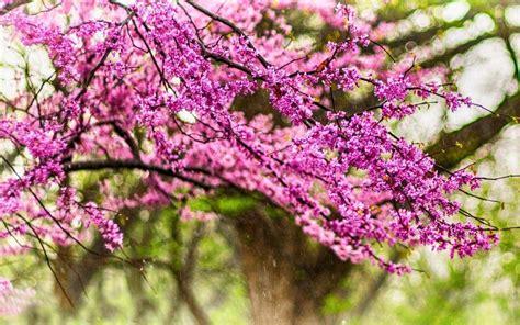sfondi desktop primavera fiori desktop wallpaper primavera 2016