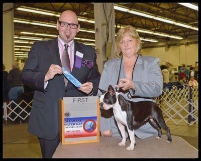 boston terrier puppies nj berisasbostonterriersofnj boston terriers boxers bulldogs puppies for sale