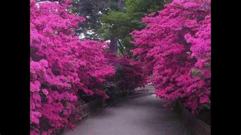 imagenes paisajes japoneses paisajes japoneses youtube