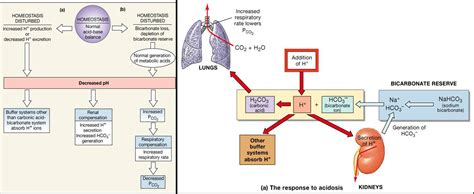 electrolyte diagram electrolyte fluid balance