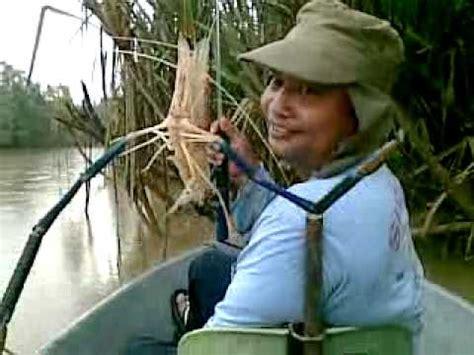 Pancing Udang Galah mancing udang galah mawai