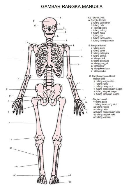 Kerangka Manusia daftar nama rangka manusia beserta gambar universal