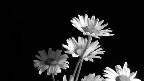 desktop wallpaper black and white flowers black and white flower 918646 walldevil