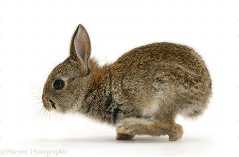 baby european rabbit photo wp14816