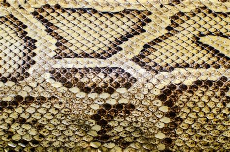 pattern up slang snake skin texture stock photo colourbox