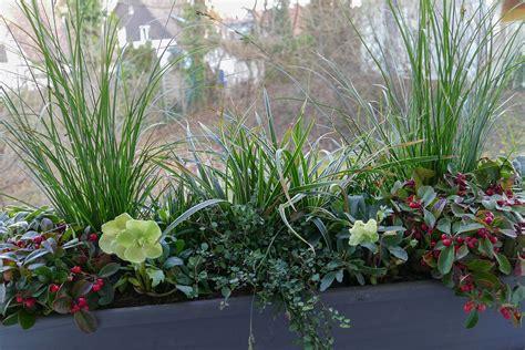 Winterbepflanzung F R Balkonk Sten Und K Bel Garten 5400 by Winterharte Pflanzen F 252 R Balkonk 228 Sten Balkonpflanzen Set