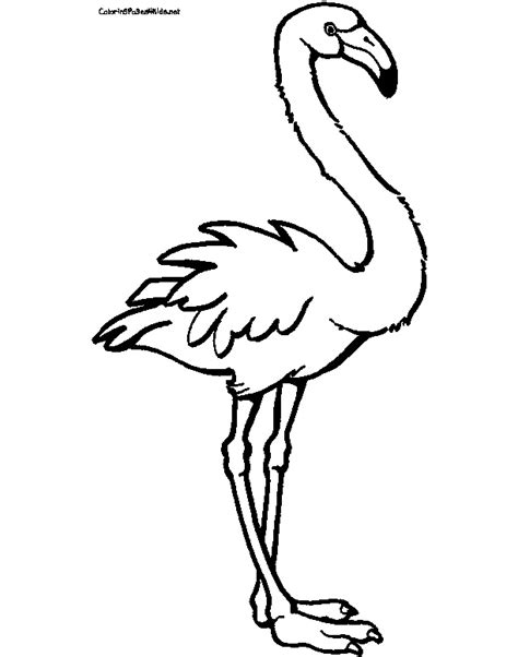 flamingo christmas coloring coloring pages