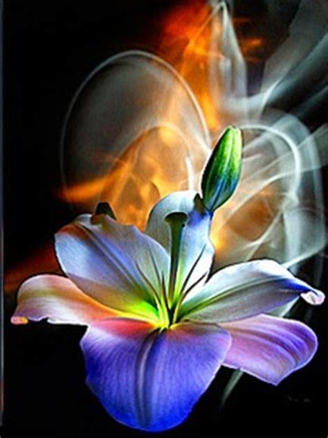 imagenes hermosa de amor animadas rosas con brillo flores hermosas lindas hermosas