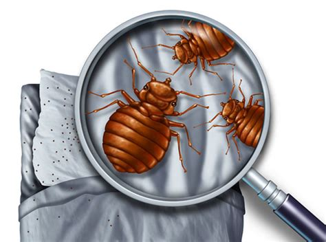 Bed Bug Pest Controllers
