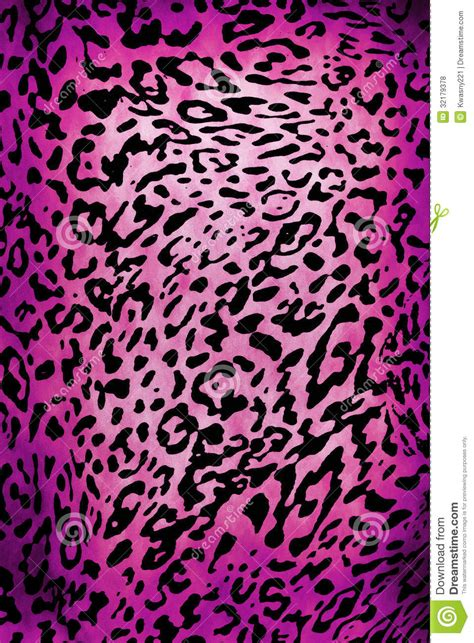 leopard pattern stock photo image  safari chetah