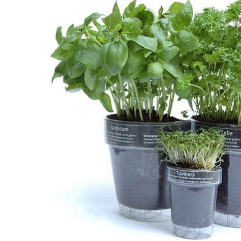 herb pots windowherbs transparent suction cup herb pots the