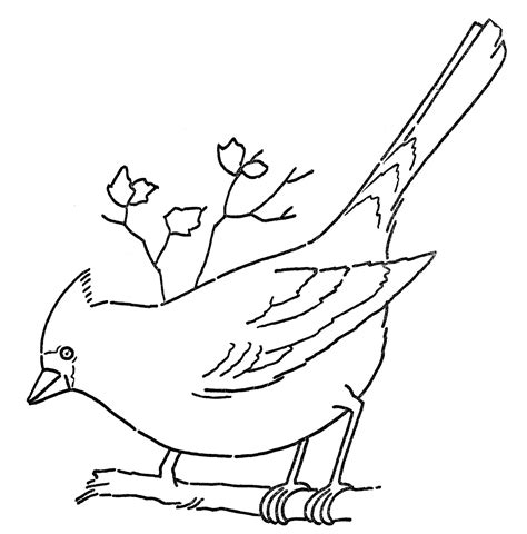 line art coloring page cardinal on branch the