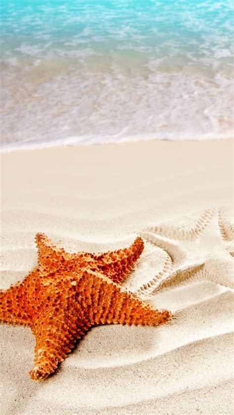 Real Steps To Resolution Relax With by Wallpaper Sea 5k 4k Wallpaper Starfish Shore