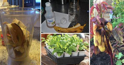 banana peel    garden