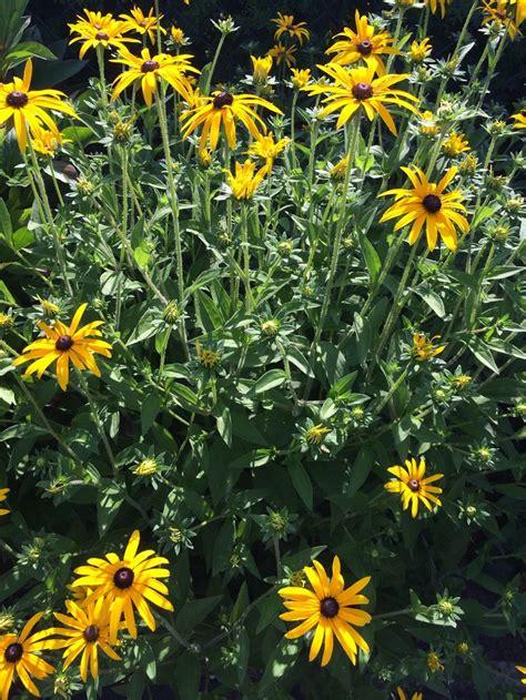 Garten Blumen by Gelbe Blumen Im Garten Flower Up Your