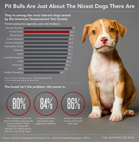 nicest dogs pit bulls are just about the nicest dogs there are