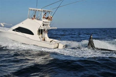 killer whale attacks fishing boat the peconic puffin windsurfing blog spectacular displays