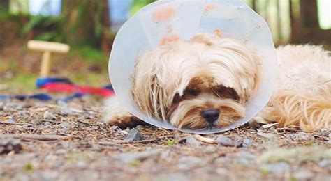 yorkie knee issues keep your indoor cat safe from common household hazards figo pet insurance