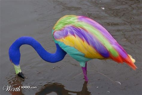 what color is a flamingo rainbow flamingo color magic flamingo rainbow