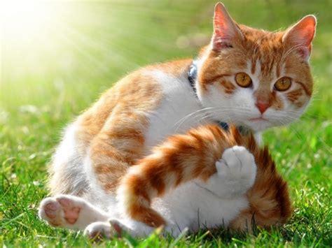 blut im stuhl bei katzen ursachen meine katze zieht sich zur 252 ck m 246 gliche ursachen katzen ag