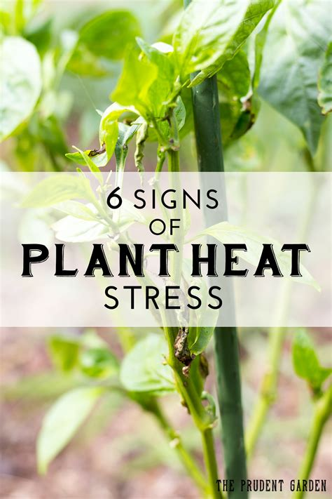 symptoms and solutions plant moisture stress 6 signs of plant heat stress